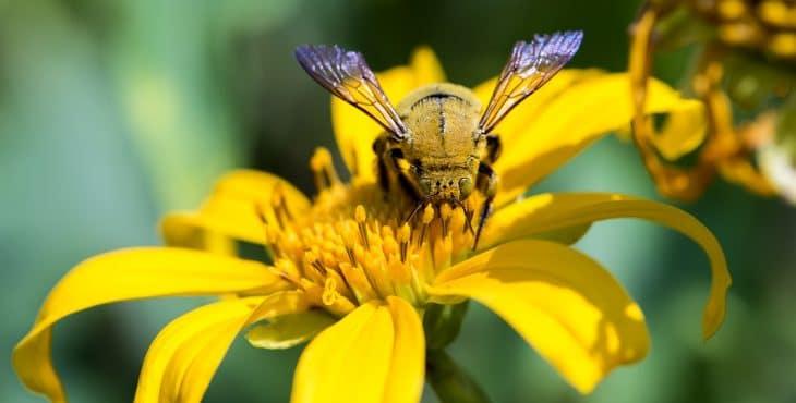 El polen genera muchas de las alergias en los ninos