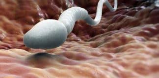 Cómo mantener la salud de la esperma