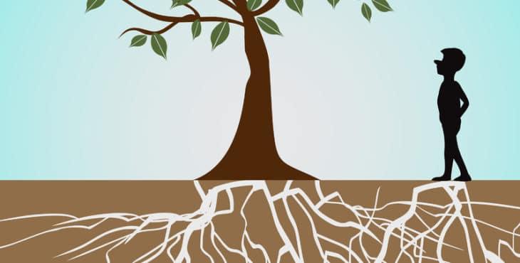 Características del árbol