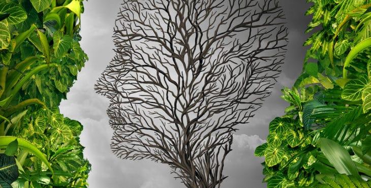 El Test del árbol es una prueba psicológica