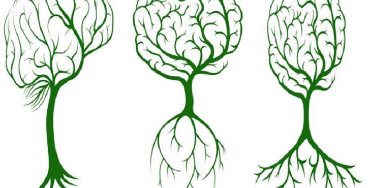 Formas diferentes de raíces