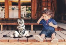 enfermedad por arañazo de gato