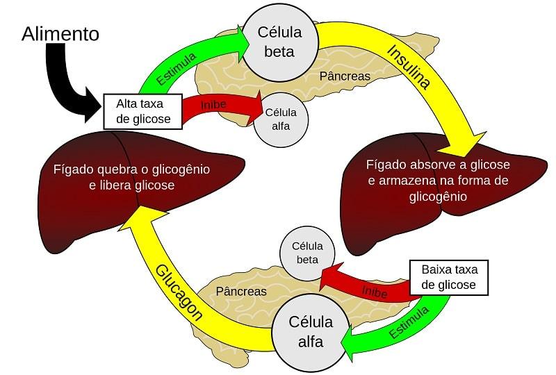 1- El metabolismo de la glucosa es complejo y más aun..